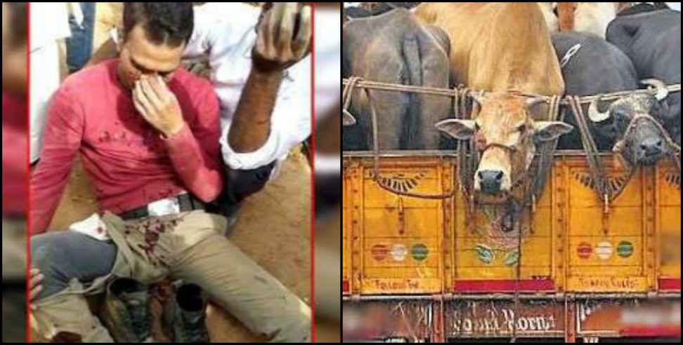 Image: Policeman crushed by a tractor while chasing cow smuggler
