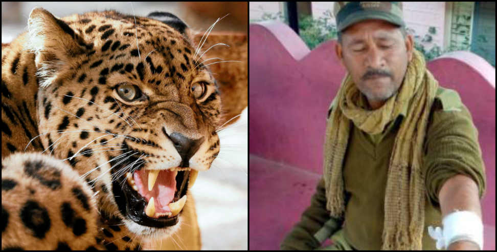 Image: Leopard attacked security guard