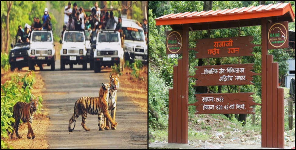 Image: Tourists have thronged in rajaji tiger reserve haridwar