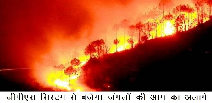 Image: quick action will be taken on forest fire