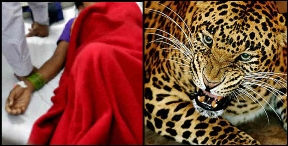 Image: Leopard attacked on women in pithoragarh