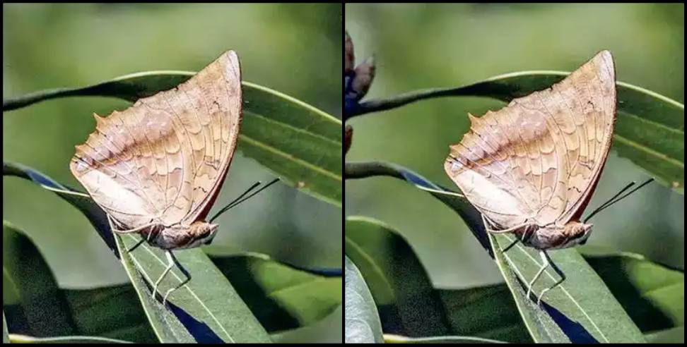Image: Rare butterfly returned to Nainital after 110 years