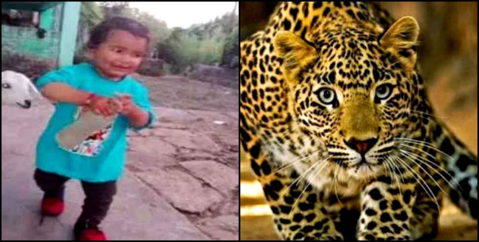 Leopard kill child in berinag - Leopard kill child, berinag, pithoragarh, Uttarakhand, उत्तराखंड, पिथौरागढ़, गुलदार का हमला, वन विभाग, uttarakhand, uttarakhand news, latest news from uttarakhand
