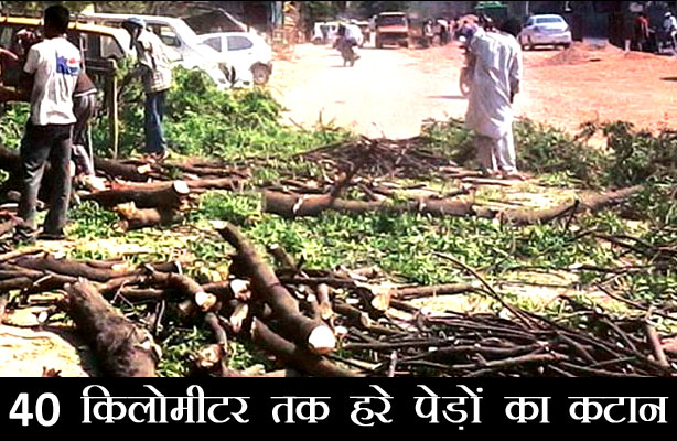 more than 14 thousand trees cut in uttarakhand for NH87 - NH87, Environment, Polution,उत्तराखंड,