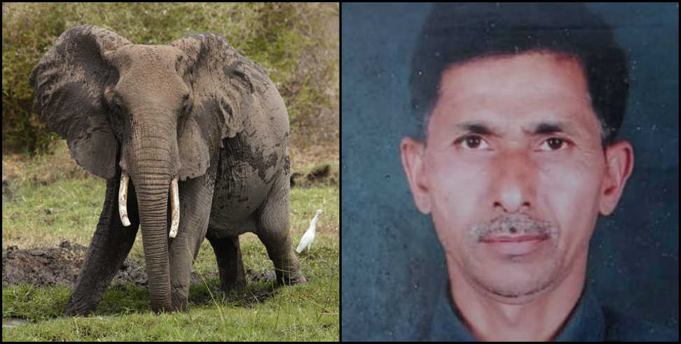 Image: Elephant killed a farmer in uttarakhand