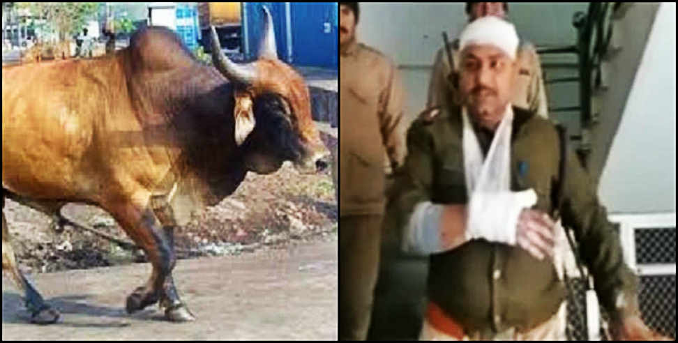 Image: policeman attacked by stray bull in kotdwar
