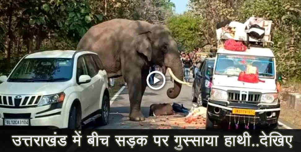 elephant enters in road in uttarakhand - uttarakhand elephant, elephant, uttarakhand, uttarakhand news, latest news from uttarakhand,नैनीताल,रामनगर वन प्रभाग,राशन