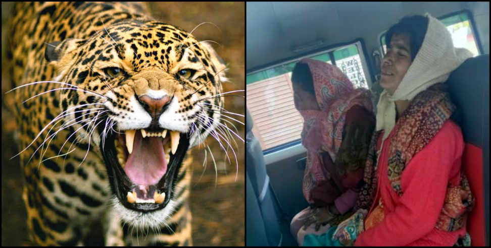 Image: Leopard attacked on women in kamad village