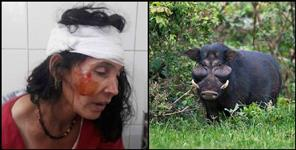 wild pig attacked on two women