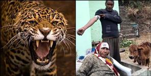 Leopard attack in almora