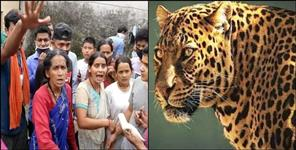 leopard killed old age women in nainital haldwani