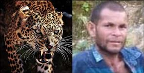 Leopard killed youth in pithoragarh
