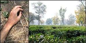 Three months old dead body found in ambiwala tea state