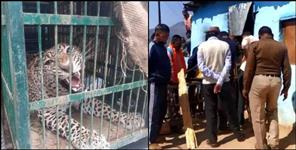 Leopard entered Dhumakot house