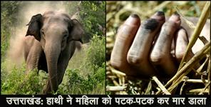 ut: ELEPHANT ATTACK ON WOMEN IN UTTARAKHAND