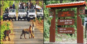 Tourists have thronged in rajaji tiger reserve haridwar