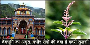 BENEFIT OF BADRI TULSI BADRINATH