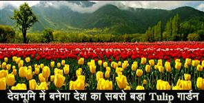 INDIAS LARGEST TULIP GARDEN TO OPEN IN UTTARAKHAND