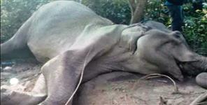 Elephant death in Jim Corbett National Park