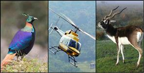 kedarnath: Heli companies creating disturbance for wild animals