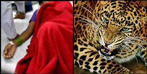 Leopard attacked on women in pithoragarh