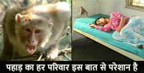 MONKEY ATTACKED ON STUDENT IN ALMORA