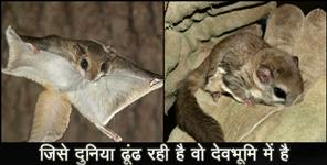 editorial: FLYING SQUIRREL IN UTTARAKHAND