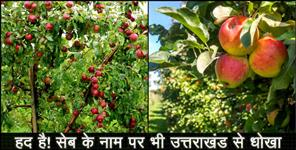 uttarkashi: HARSHIL APPLE SELING BY THE NAME OF HIMACHAL APPLE