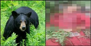Woman attacked by a bear in Narendranagar