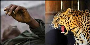 Leopard killed a man  in Chamoli