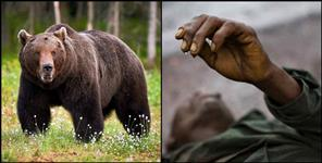 Bear attacked and injured the old man in yamkeshwar