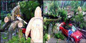 nainital tree fallen in car