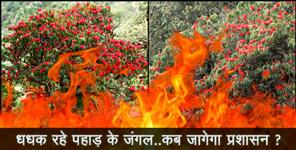 chamoli: forest fire in uttarakhand