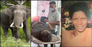 paurigarhwal news : Elephant attack on woman in Kotdwar