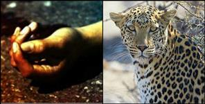 Leopard killed 9 years old child in pauri