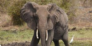 Wild elephant group terror in bajpur