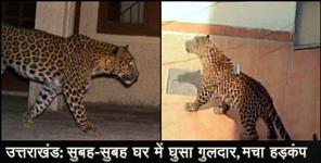 Leopard enters home in almora