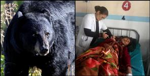चमोली: BEAR ATTACK ON A WOMEN IN GOPESHWAR UTTARAKHAND
