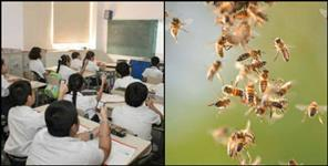 bees entered classes during examination in kashipur