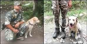 CRPF DOG found man trapped under debris