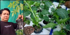 Ganesh Bisht uses hydroponic method to grow vegitable in Uttarakhand