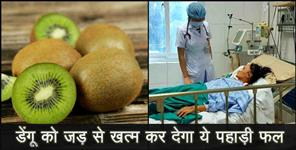 healthandlife: Kiwi fruit is best medicine for dengue
