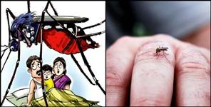 almora: Four including child die from dengue in doon