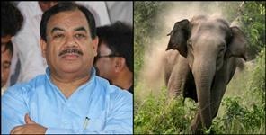 harak singh rawat elephant face to face