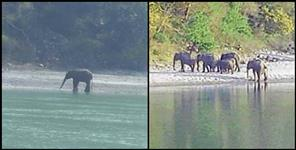 Elephants reached the ganges coast in Rishikesh