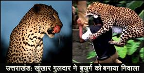 pithoragarh: Leopard killed old man in almora