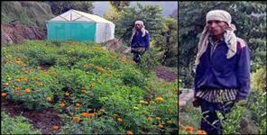 pithoragarh: Flower farming will create jobs in pithoragarh