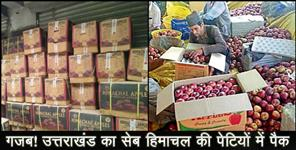 uttarkashi: Farmers purchased 4.5 lakh cases of apples from himachal pradesh