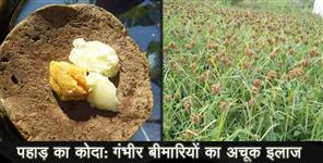 benefits of koda mandua of uttarakhand