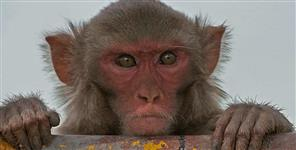 देहरादून: monkey took seven thousand rupee in rishikesh